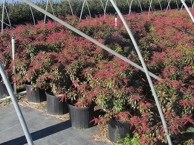 has over 20 acres of containerized plants, pot-n-pot shrubs and trees